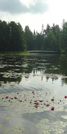 Water lily path